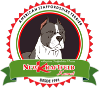 New Kraftfeld Kennel - American Staffordshire Terrier